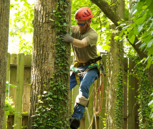 Tree Trimming Harness-Florida Tree Service Pros-We Offer Tree Trimming Services, Tree Removal, Tree Pruning, Tree Cutting, Residential and Commercial Tree Trimming Services, Storm Damage, Emergency Tree Removal, Land Clearing, Tree Companies, Tree Care Service, Stump Grinding, and we're the Best Tree Trimming Company Near You Guaranteed!