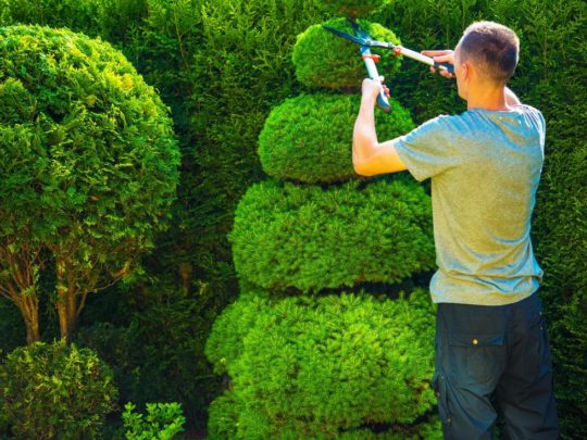 Tree Trimming Landscaping-Florida Tree Service Pros-We Offer Tree Trimming Services, Tree Removal, Tree Pruning, Tree Cutting, Residential and Commercial Tree Trimming Services, Storm Damage, Emergency Tree Removal, Land Clearing, Tree Companies, Tree Care Service, Stump Grinding, and we're the Best Tree Trimming Company Near You Guaranteed!