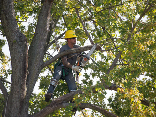 Tree Trimming Near Me-Florida-Florida Tree Service Pros-We Offer Tree Trimming Services, Tree Removal, Tree Pruning, Tree Cutting, Residential and Commercial Tree Trimming Services, Storm Damage, Emergency Tree Removal, Land Clearing, Tree Companies, Tree Care Service, Stump Grinding, and we're the Best Tree Trimming Company Near You Guaranteed!