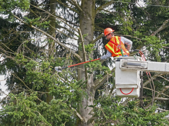 Tree Trimming Near Power Lines-Florida Tree Service Pros-We Offer Tree Trimming Services, Tree Removal, Tree Pruning, Tree Cutting, Residential and Commercial Tree Trimming Services, Storm Damage, Emergency Tree Removal, Land Clearing, Tree Companies, Tree Care Service, Stump Grinding, and we're the Best Tree Trimming Company Near You Guaranteed!