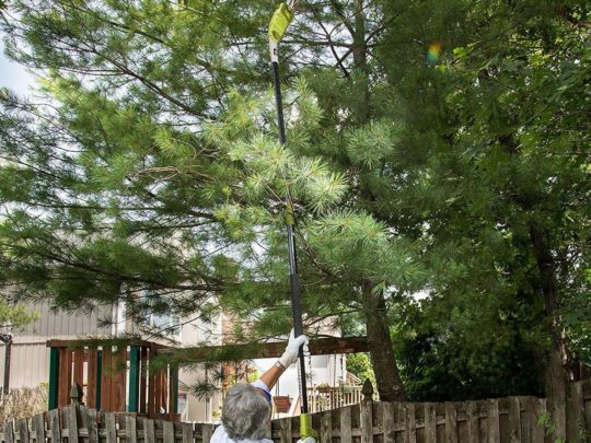 Tree Trimming Pole-Florida Tree Service Pros-We Offer Tree Trimming Services, Tree Removal, Tree Pruning, Tree Cutting, Residential and Commercial Tree Trimming Services, Storm Damage, Emergency Tree Removal, Land Clearing, Tree Companies, Tree Care Service, Stump Grinding, and we're the Best Tree Trimming Company Near You Guaranteed!