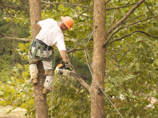 Tree Trimming Removal Service-Florida Tree Service Pros-We Offer Tree Trimming Services, Tree Removal, Tree Pruning, Tree Cutting, Residential and Commercial Tree Trimming Services, Storm Damage, Emergency Tree Removal, Land Clearing, Tree Companies, Tree Care Service, Stump Grinding, and we're the Best Tree Trimming Company Near You Guaranteed!