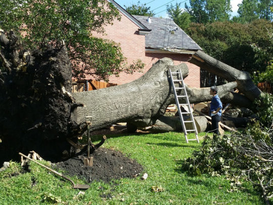 Tree Trimming Service Near Me-Florida Tree Service Pros-We Offer Tree Trimming Services, Tree Removal, Tree Pruning, Tree Cutting, Residential and Commercial Tree Trimming Services, Storm Damage, Emergency Tree Removal, Land Clearing, Tree Companies, Tree Care Service, Stump Grinding, and we're the Best Tree Trimming Company Near You Guaranteed!