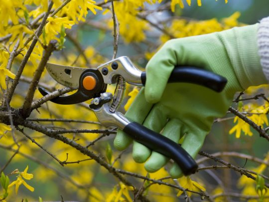 Tree Trimming Tips-Florida Tree Service Pros-We Offer Tree Trimming Services, Tree Removal, Tree Pruning, Tree Cutting, Residential and Commercial Tree Trimming Services, Storm Damage, Emergency Tree Removal, Land Clearing, Tree Companies, Tree Care Service, Stump Grinding, and we're the Best Tree Trimming Company Near You Guaranteed!