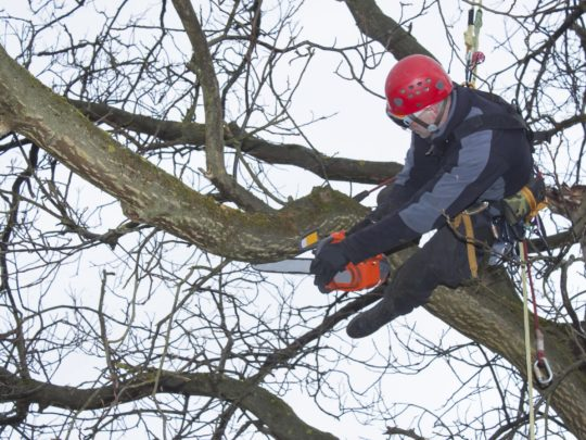Tree Trimming and Pruning-Florida Tree Service Pros-We Offer Tree Trimming Services, Tree Removal, Tree Pruning, Tree Cutting, Residential and Commercial Tree Trimming Services, Storm Damage, Emergency Tree Removal, Land Clearing, Tree Companies, Tree Care Service, Stump Grinding, and we're the Best Tree Trimming Company Near You Guaranteed!