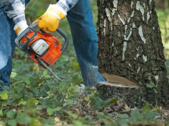 Tree Trimming and Removal Cost-Florida Tree Service Pros-We Offer Tree Trimming Services, Tree Removal, Tree Pruning, Tree Cutting, Residential and Commercial Tree Trimming Services, Storm Damage, Emergency Tree Removal, Land Clearing, Tree Companies, Tree Care Service, Stump Grinding, and we're the Best Tree Trimming Company Near You Guaranteed!