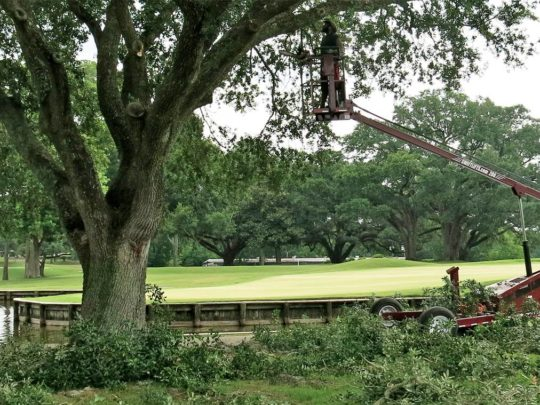 Tree Trimming near me-Florida Tree Service Pros-We Offer Tree Trimming Services, Tree Removal, Tree Pruning, Tree Cutting, Residential and Commercial Tree Trimming Services, Storm Damage, Emergency Tree Removal, Land Clearing, Tree Companies, Tree Care Service, Stump Grinding, and we're the Best Tree Trimming Company Near You Guaranteed!