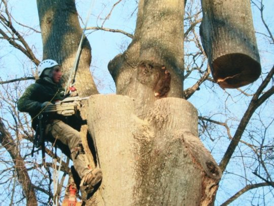 Tree Arborist prices Florida-Florida Tree Service Pros-We Offer Tree Trimming Services, Tree Removal, Tree Pruning, Tree Cutting, Residential and Commercial Tree Trimming Services, Storm Damage, Emergency Tree Removal, Land Clearing, Tree Companies, Tree Care Service, Stump Grinding, and we're the Best Tree Trimming Company Near You Guaranteed!