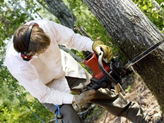 Tree cutters in my area-Florida Tree Service Pros-We Offer Tree Trimming Services, Tree Removal, Tree Pruning, Tree Cutting, Residential and Commercial Tree Trimming Services, Storm Damage, Emergency Tree Removal, Land Clearing, Tree Companies, Tree Care Service, Stump Grinding, and we're the Best Tree Trimming Company Near You Guaranteed!