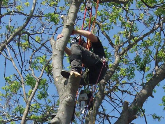 Tree pruning company-Florida Tree Service Pros-We Offer Tree Trimming Services, Tree Removal, Tree Pruning, Tree Cutting, Residential and Commercial Tree Trimming Services, Storm Damage, Emergency Tree Removal, Land Clearing, Tree Companies, Tree Care Service, Stump Grinding, and we're the Best Tree Trimming Company Near You Guaranteed!