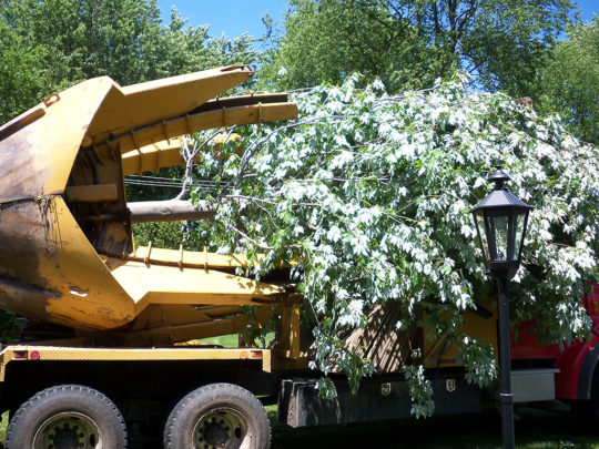 Tree relocation service-Florida Tree Service Pros-We Offer Tree Trimming Services, Tree Removal, Tree Pruning, Tree Cutting, Residential and Commercial Tree Trimming Services, Storm Damage, Emergency Tree Removal, Land Clearing, Tree Companies, Tree Care Service, Stump Grinding, and we're the Best Tree Trimming Company Near You Guaranteed!