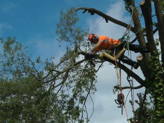 Tree removal arborist-Florida Tree Service Pros-We Offer Tree Trimming Services, Tree Removal, Tree Pruning, Tree Cutting, Residential and Commercial Tree Trimming Services, Storm Damage, Emergency Tree Removal, Land Clearing, Tree Companies, Tree Care Service, Stump Grinding, and we're the Best Tree Trimming Company Near You Guaranteed!