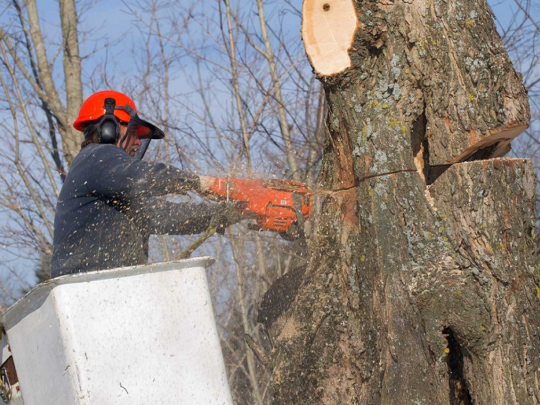 Tree removal companies-Florida Tree Service Pros-We Offer Tree Trimming Services, Tree Removal, Tree Pruning, Tree Cutting, Residential and Commercial Tree Trimming Services, Storm Damage, Emergency Tree Removal, Land Clearing, Tree Companies, Tree Care Service, Stump Grinding, and we're the Best Tree Trimming Company Near You Guaranteed!