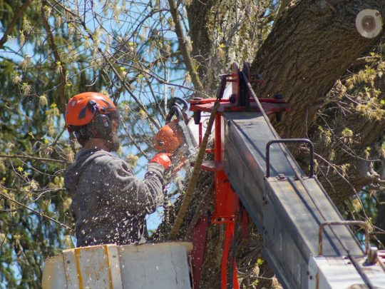Tree removal cost estimate-Florida Tree Service Pros-We Offer Tree Trimming Services, Tree Removal, Tree Pruning, Tree Cutting, Residential and Commercial Tree Trimming Services, Storm Damage, Emergency Tree Removal, Land Clearing, Tree Companies, Tree Care Service, Stump Grinding, and we're the Best Tree Trimming Company Near You Guaranteed!