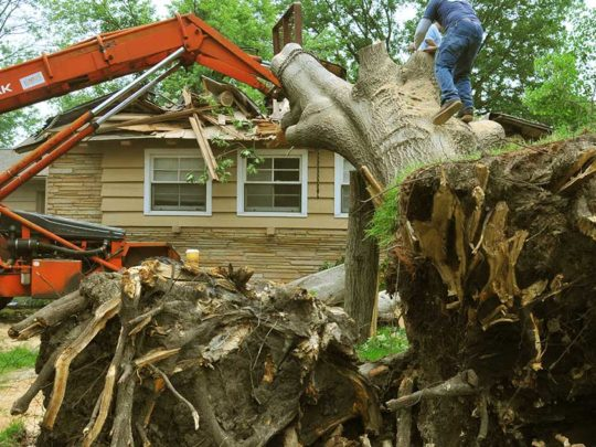Tree removal cost per tree-Florida Tree Service Pros-We Offer Tree Trimming Services, Tree Removal, Tree Pruning, Tree Cutting, Residential and Commercial Tree Trimming Services, Storm Damage, Emergency Tree Removal, Land Clearing, Tree Companies, Tree Care Service, Stump Grinding, and we're the Best Tree Trimming Company Near You Guaranteed!