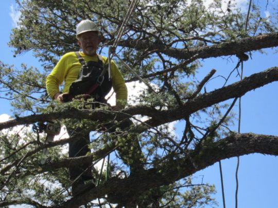 Tree removal service cost-Florida Tree Service Pros-We Offer Tree Trimming Services, Tree Removal, Tree Pruning, Tree Cutting, Residential and Commercial Tree Trimming Services, Storm Damage, Emergency Tree Removal, Land Clearing, Tree Companies, Tree Care Service, Stump Grinding, and we're the Best Tree Trimming Company Near You Guaranteed!