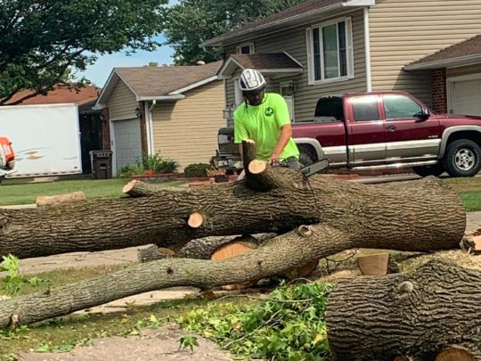 Tree service businesses-Florida Tree Service Pros-We Offer Tree Trimming Services, Tree Removal, Tree Pruning, Tree Cutting, Residential and Commercial Tree Trimming Services, Storm Damage, Emergency Tree Removal, Land Clearing, Tree Companies, Tree Care Service, Stump Grinding, and we're the Best Tree Trimming Company Near You Guaranteed!