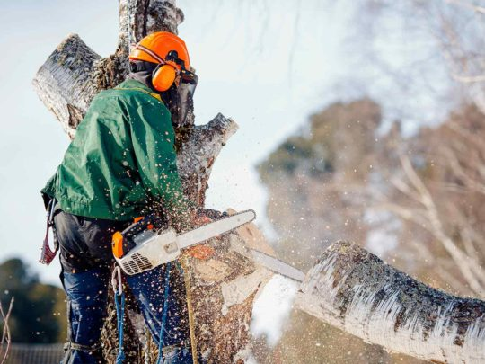 Tree service local-Florida Tree Service Pros-We Offer Tree Trimming Services, Tree Removal, Tree Pruning, Tree Cutting, Residential and Commercial Tree Trimming Services, Storm Damage, Emergency Tree Removal, Land Clearing, Tree Companies, Tree Care Service, Stump Grinding, and we're the Best Tree Trimming Company Near You Guaranteed!