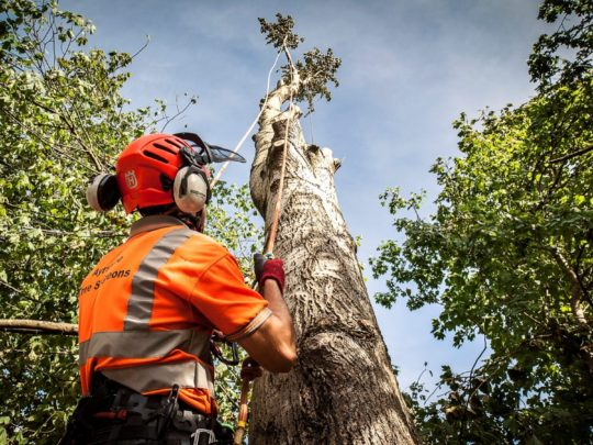 Tree surgeons-Florida Tree Service Pros-We Offer Tree Trimming Services, Tree Removal, Tree Pruning, Tree Cutting, Residential and Commercial Tree Trimming Services, Storm Damage, Emergency Tree Removal, Land Clearing, Tree Companies, Tree Care Service, Stump Grinding, and we're the Best Tree Trimming Company Near You Guaranteed!
