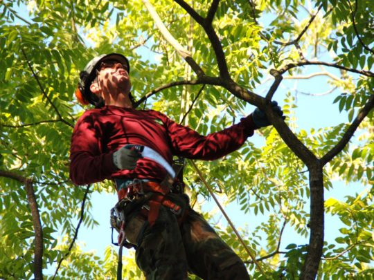 Tree treatment companies-Florida Tree Service Pros-We Offer Tree Trimming Services, Tree Removal, Tree Pruning, Tree Cutting, Residential and Commercial Tree Trimming Services, Storm Damage, Emergency Tree Removal, Land Clearing, Tree Companies, Tree Care Service, Stump Grinding, and we're the Best Tree Trimming Company Near You Guaranteed!