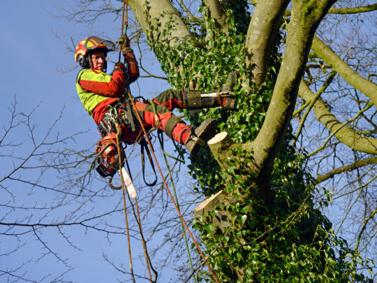Tree trimmers near me-Florida Tree Service Pros-We Offer Tree Trimming Services, Tree Removal, Tree Pruning, Tree Cutting, Residential and Commercial Tree Trimming Services, Storm Damage, Emergency Tree Removal, Land Clearing, Tree Companies, Tree Care Service, Stump Grinding, and we're the Best Tree Trimming Company Near You Guaranteed!