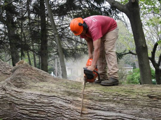 Tree trimming and removal near me-Florida Tree Service Pros-We Offer Tree Trimming Services, Tree Removal, Tree Pruning, Tree Cutting, Residential and Commercial Tree Trimming Services, Storm Damage, Emergency Tree Removal, Land Clearing, Tree Companies, Tree Care Service, Stump Grinding, and we're the Best Tree Trimming Company Near You Guaranteed!