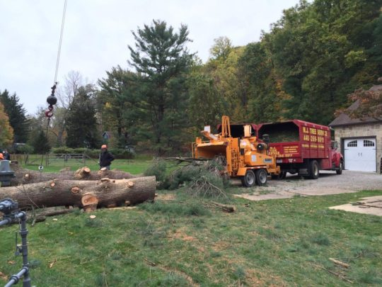 Trees services near me-Florida Tree Service Pros-We Offer Tree Trimming Services, Tree Removal, Tree Pruning, Tree Cutting, Residential and Commercial Tree Trimming Services, Storm Damage, Emergency Tree Removal, Land Clearing, Tree Companies, Tree Care Service, Stump Grinding, and we're the Best Tree Trimming Company Near You Guaranteed!