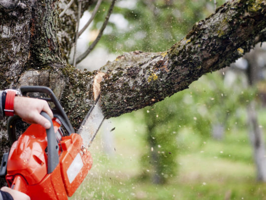 When To Trim a Tree-Florida Tree Service Pros-We Offer Tree Trimming Services, Tree Removal, Tree Pruning, Tree Cutting, Residential and Commercial Tree Trimming Services, Storm Damage, Emergency Tree Removal, Land Clearing, Tree Companies, Tree Care Service, Stump Grinding, and we're the Best Tree Trimming Company Near You Guaranteed!